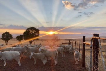 Maluti Farming Pals Heralds New Dawn For Land Reform